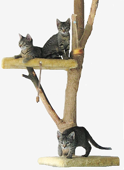 Betterhomes and gardens for How to make a cat tower
